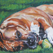 Amstaff With Ball Art Print
