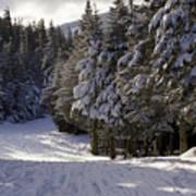 An Alpine Ski Trail On Wildcat Mountain Art Print