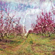 An Orchard In Blossom In The Golan Heights Art Print
