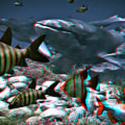 Anaglyph Whales Art Print