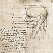 Anatomical Drawing By Leonardo Da Vinci Art Print