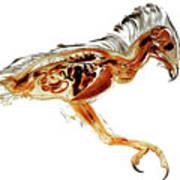 Anatomical Plastination Specimen Of A Honey Buzzard Art Print
