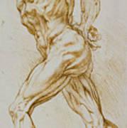Anatomical Study Art Print