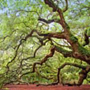 Ancient Angel Oak Tree  Art Print
