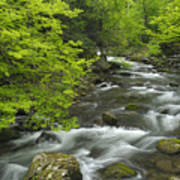 Ancient Cascades In Great Smoky Mountains Art Print