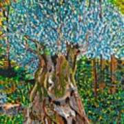 Ancient Olive Tree Art Print