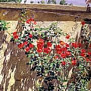 Ancient Roses Art Print