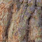 Ancient Tree Skin Art Print
