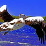 And The Seagull Follows Pelican Art Print