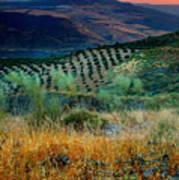 Andalucian Landscape  Art Print