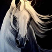 Andalusian Stallion Art Print