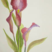 Andy's Calla Lillies Art Print