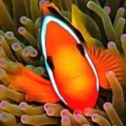Anemone Fish Art Print