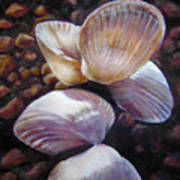 Ane's Shells Art Print