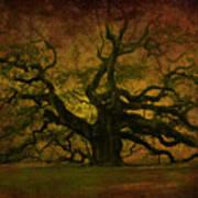 Angel Oak 3 Charleston Art Print