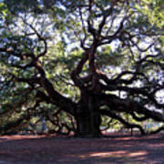Angel Oak II Art Print