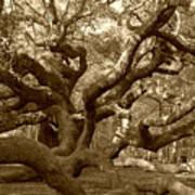 Angel Oak In Sepia Art Print