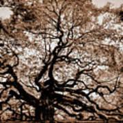 Angel Oak Johns Island Sc Art Print