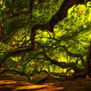 Angel Oak Limbs 2 Art Print by Susanne Van Hulst