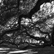 Angel Oak Limbs Bw Art Print