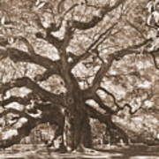 Angel Oak Sepia Art Print