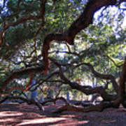 Angel Oak Side View Art Print
