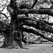 Angel Oak Tree 2009 Black And White Art Print by Louis Dallara