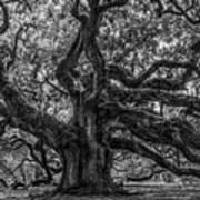 Angel Oak Tree Americana Art Print