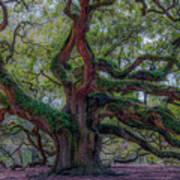 Angel Oak Tree Deeply Rooted History Art Print