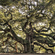 Angel Oak Tree Live Oak  Art Print