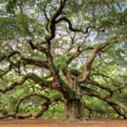 Angel Oak Tree Of Life Art Print