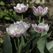 Angelique Peony Tulips Squared Art Print