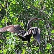 Anhinga In The Sun Art Print