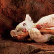 Animal - Cat - My Chew Toy Art Print