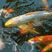 Animal - Fish - Bestow Good Fortune Art Print