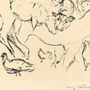 Animal Studies (verschiedene Tierstudien) Art Print