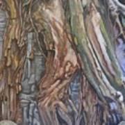 Ankor Temple Trees  Art Print