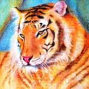 Ano Do Tigre Art Print