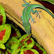 Anole Having A Drink Art Print