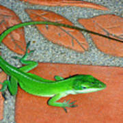 Anole On Chair Tiles Art Print