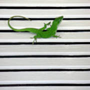 Anole Shuttered Out Art Print