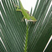 Anole With Palm - Assertive Art Print