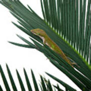 Anole With Palm - Coy Art Print