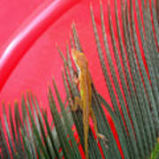 Anole With Palm - In The Red Art Print