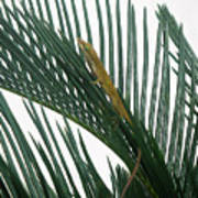 Anole With Palm - Looking Up Art Print