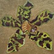 Ansellia Species Art Print