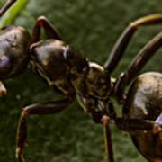 Ant On A Leaf Art Print by Ryan Kelly