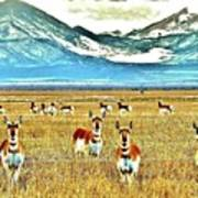 Antelope At Attention Art Print