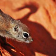 Antelope Ground Squirrel II Art Print