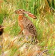 Antelope Jackrabbit Art Print